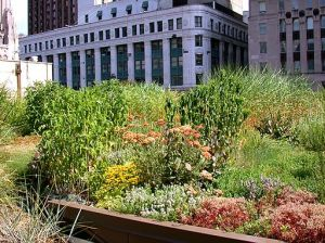 Chicago-City-Hall-Green-Roof