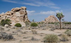 Joshua Tree National Park, Tuxyso / Wikimedia Commons / CC-BY-SA-3.0