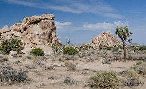 Joshua Tree National Park, Tuxyso / Wikimedia Commons / CC-BY-SA-3.0